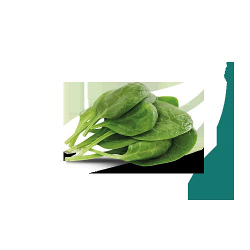 spenót